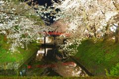 弘前城さくら