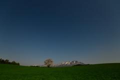 満月に照らされる一本桜