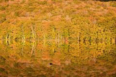 蔦沼の紅葉