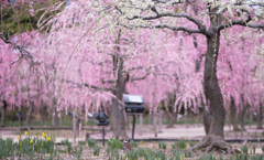 plum grove..✲