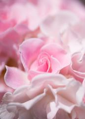 *..Rose..*