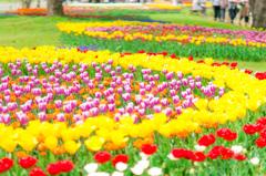 春色サークル