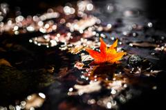 秋の忘れモノ