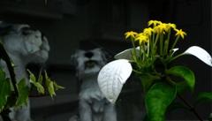 休憩タイム(46) 何んの花 ?