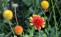 休憩タイム(44)花