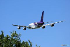 「そらー」 Thai A380-841 HS-TUE 飛び立ち