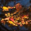 散りてなを - 水辺の落葉3