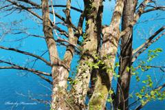 エメラルドグリーンの芽吹きⅡ