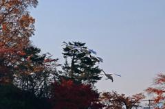 里の彩 - 高松の池 Ⅶ