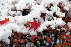 冬の彩 - 初積雪