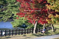 みちのく紅葉 - 高松の池Ⅱ
