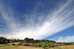 高原の春 - 高森高原Ⅴ