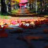 散りてなを…参道の秋