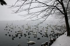 朝霧 - 高松の池