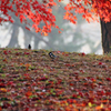 里の彩 - 晩秋の朝