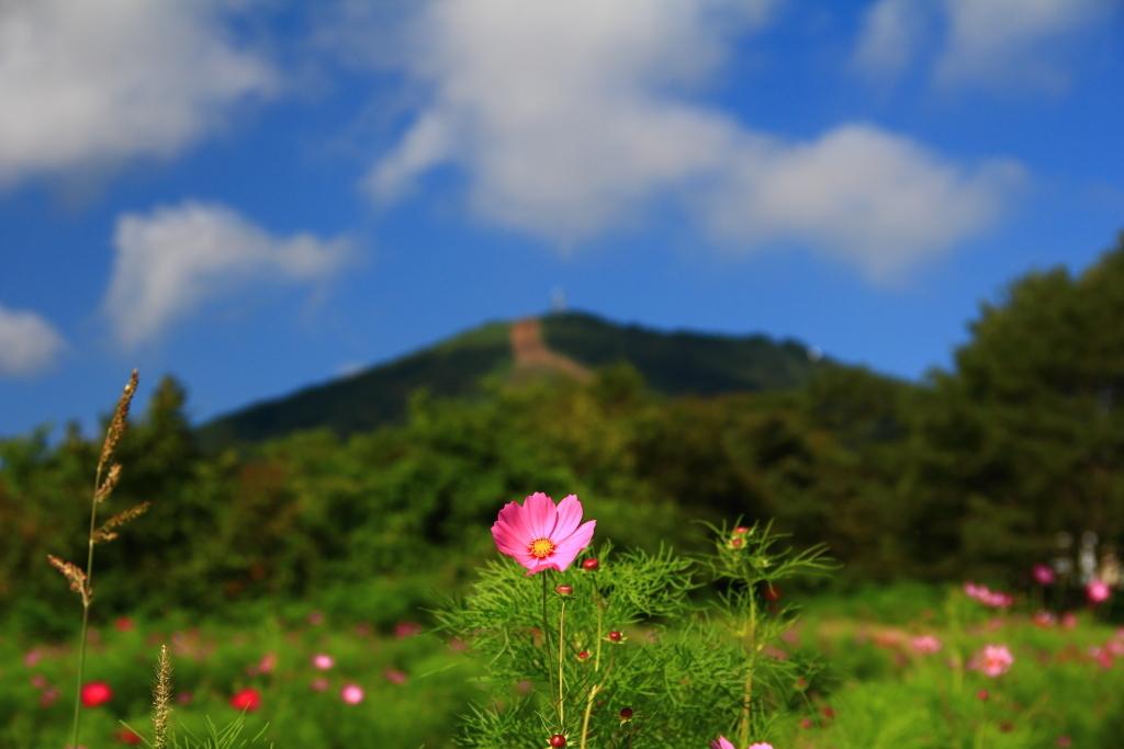 西岳 - 奥中山高原コスモスパーク