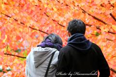 みちのく紅葉 - 盛岡城跡公園