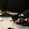 秋桜のメロディー - Ⅱ