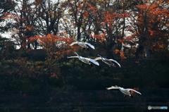 里の彩 - 高松の池 Ⅸ