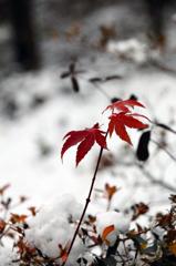 冬の彩 - 初積雪2