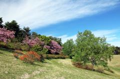 高原の春 - 高森高原Ⅵ