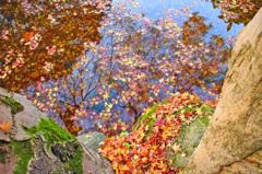 落葉の彩 - 水紅葉3