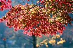 秋彩探し - 高松の池2
