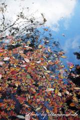 水面落葉Ⅱ