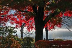逆光のグラデ紅葉