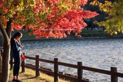 みちのく紅葉 - 高松の池