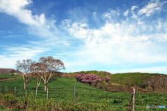 高原の春 - 高森高原Ⅶ