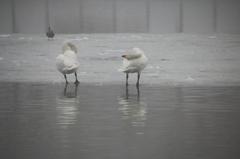 朝霧 - 高松の池3
