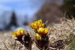みちのくも春の気配