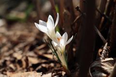 みちのくも春の気配Ⅱ