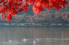 里の彩 - 高松の池 XI