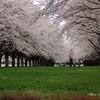 みちのくの春 - 水沢競馬場