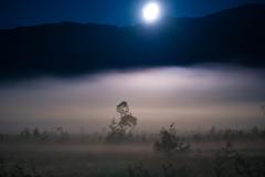 月光の幻想ステージ