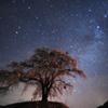 お地蔵さんの星空夜桜見物