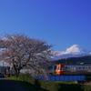 桜と富士と岳南電車