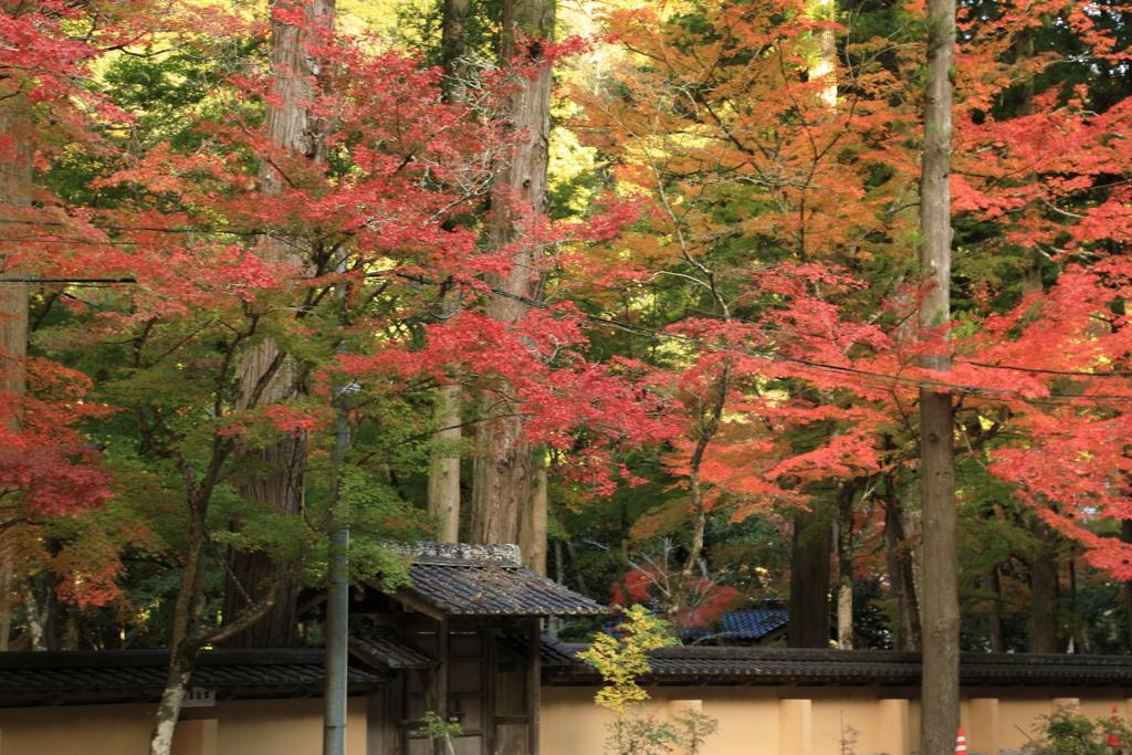 佛通寺紅葉(7) 201110-300