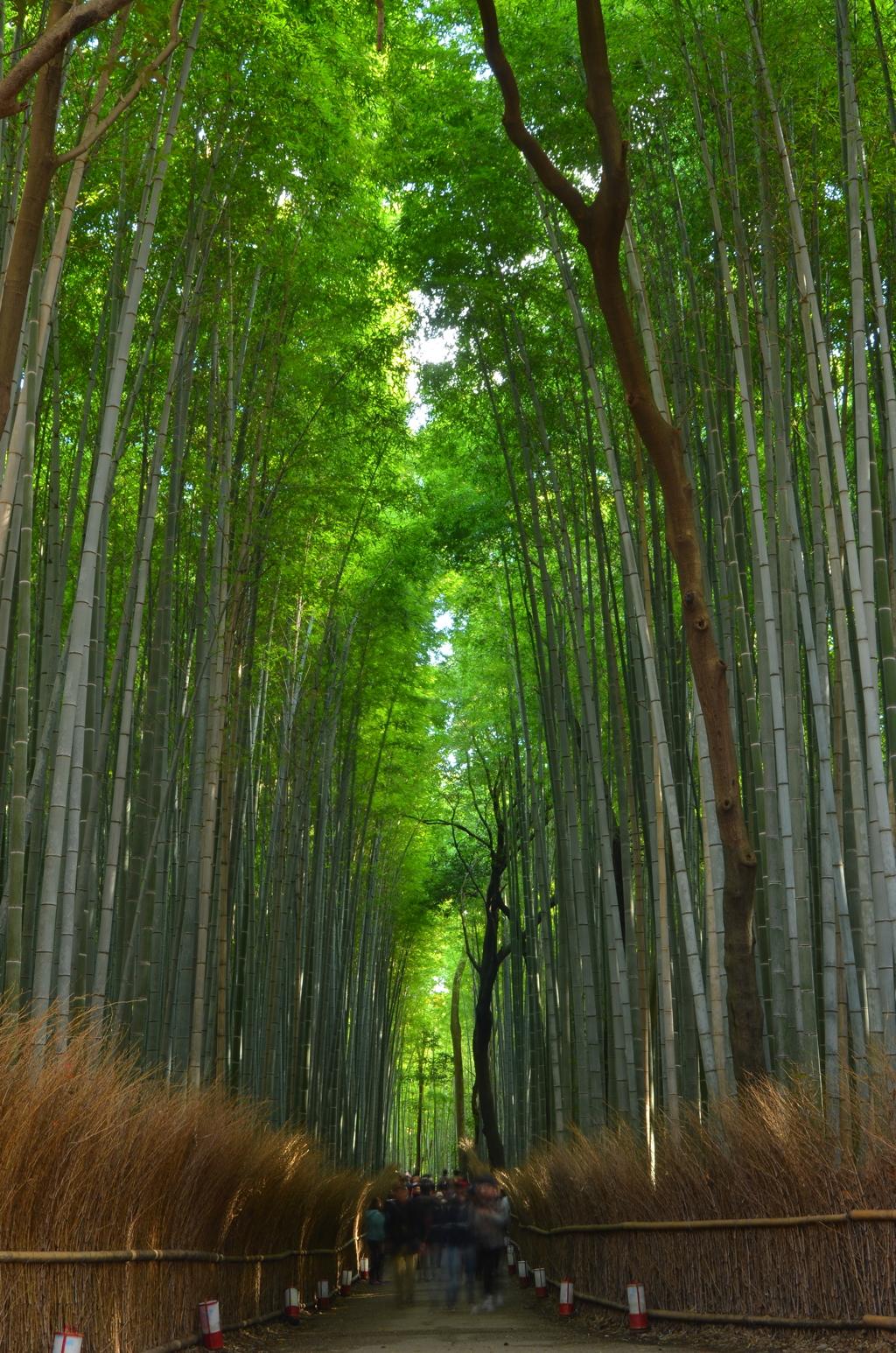 竹林の出口