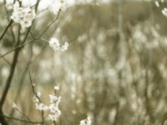 雪の花・・
