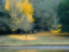 落ち葉の風景