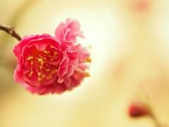梅みっつ2