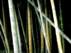 The color of the bamboo
