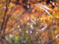 霜降の候、楓蔦黄なり