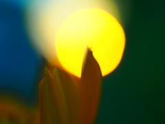 太陽のねこ
