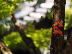 そうだ京都へいこう!2