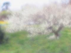 辺りはそろそろ桜と交代ですね。