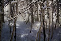 霧纏う森と光芒